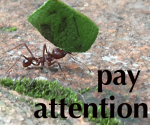 Pay Attention ant